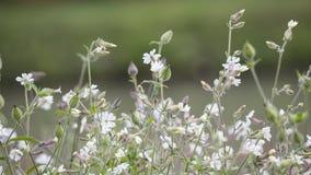 野花在草坪的秋天 库存图片
