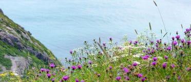 野花在陡坡的领域增长在信号小山的高峭壁附近 免版税库存照片