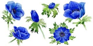 野花在水彩样式的银莲花属花被隔绝的 库存图片