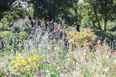 野花在Parc de贝而维尔,巴黎,法国 免版税库存照片