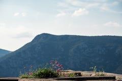 野花明信片视图反对小山的 免版税图库摄影