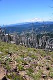 野花景色:Mt 主持的亚当斯, Darland山,小瀑布山,华盛顿州 免版税库存图片