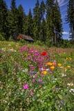 野花树和客舱,黑森林,德国 免版税库存图片