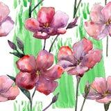 野花桃红色胡麻 花卉植物的花 无缝的背景模式 图库摄影