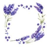 野花淡紫色在水彩样式的花框架被隔绝的 库存照片