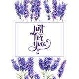 野花淡紫色在水彩样式的花框架被隔绝的 库存图片