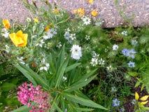 野花混合在丹佛,科罗拉多 免版税库存图片