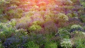 野花的彩色场在日落的 免版税库存照片