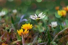 从野花的背景 免版税库存照片