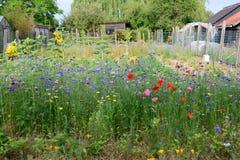 野花的领域与许多的颜色在庭院里在比利时 免版税库存图片