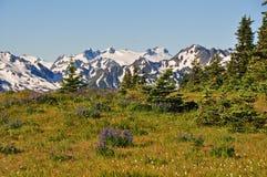 野花的领域在奥林匹克山的 库存照片