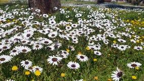 野花的领域 免版税库存照片