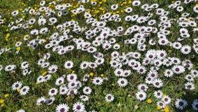 野花的领域 库存照片