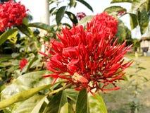 野花红色花在密林 图库摄影