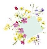 野花花束与野生康乃馨和雏菊的 库存例证