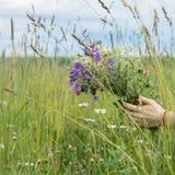 野花花束在女孩棕榈的夏天草甸背景的有小尖峰的,耳朵,天空 季节的概念 免版税库存图片