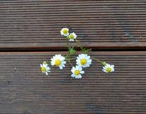 野花花束在木背景的 免版税图库摄影