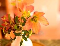 野花花束 库存照片