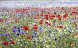 野花草甸,心材森林, Sandridge,圣奥尔本斯,赫特福德郡 免版税图库摄影