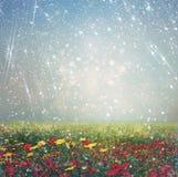 野花领域和明亮的bokeh光抽象照片  发怒处理作用 图库摄影