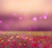 野花领域和明亮的bokeh光抽象照片  免版税库存图片