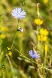 野花领域特写镜头在一个晴天 库存图片