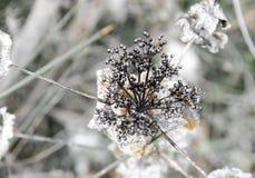 野花,无缝的样式, defocused背景 免版税库存图片