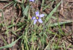野花,紫色,黄色,外面 免版税库存图片