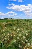 野花,领域,翁布里亚,意大利, 库存照片