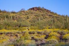 沙漠春天 库存图片