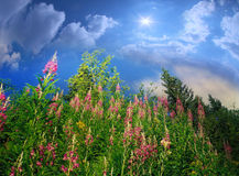 野草在森林里增长 免版税库存图片