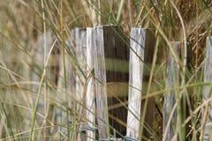 野草在La Bernerie enRetz (法国)的海滩增长 免版税库存照片