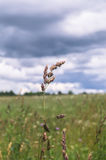 野草的小尖峰在雷暴下的一个草甸覆盖 免版税库存图片