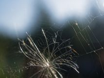 野草种子在夏天特写镜头的 库存照片