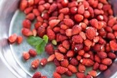 野草莓和植物在银套色板,健康吃概念生叶 免版税库存图片