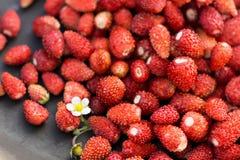 野草莓和白色开花在黑暗套色板,健康吃概念 库存图片