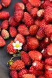 野草莓和白色开花在黑暗套色板,健康吃概念 库存照片