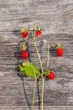 野草莓新束用在木背景的红色莓果 免版税库存照片