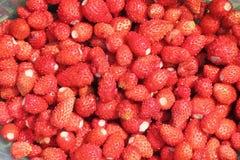 野草莓背景  图库摄影