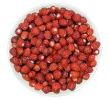 野草莓 免版税图库摄影