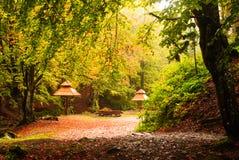 野营与雨的秋天 库存照片