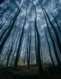 野营在杉木森林 免版税库存图片