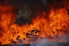 野营的火火焰森林 免版税库存图片