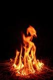 野营的火火焰森林 图库摄影