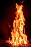 野营的火火焰森林 库存图片