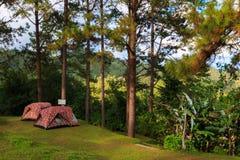 野营的自然 库存照片