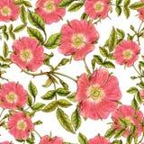 野蔷薇样式 图库摄影
