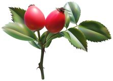 野蔷薇玫瑰甜点 免版税库存照片