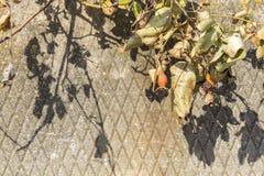 野蔷薇美好的凋枯的分支  免版税图库摄影