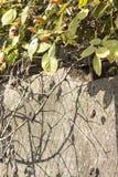 野蔷薇美好的凋枯的分支  免版税库存图片